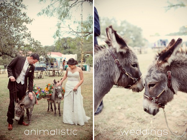Animalistic Weddings on Squirrelly Minds with Photography by Christina Carroll