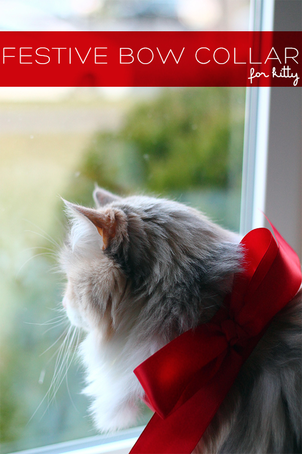 DIY Festive Bow Collar for Kitty on Squirrelly Minds
