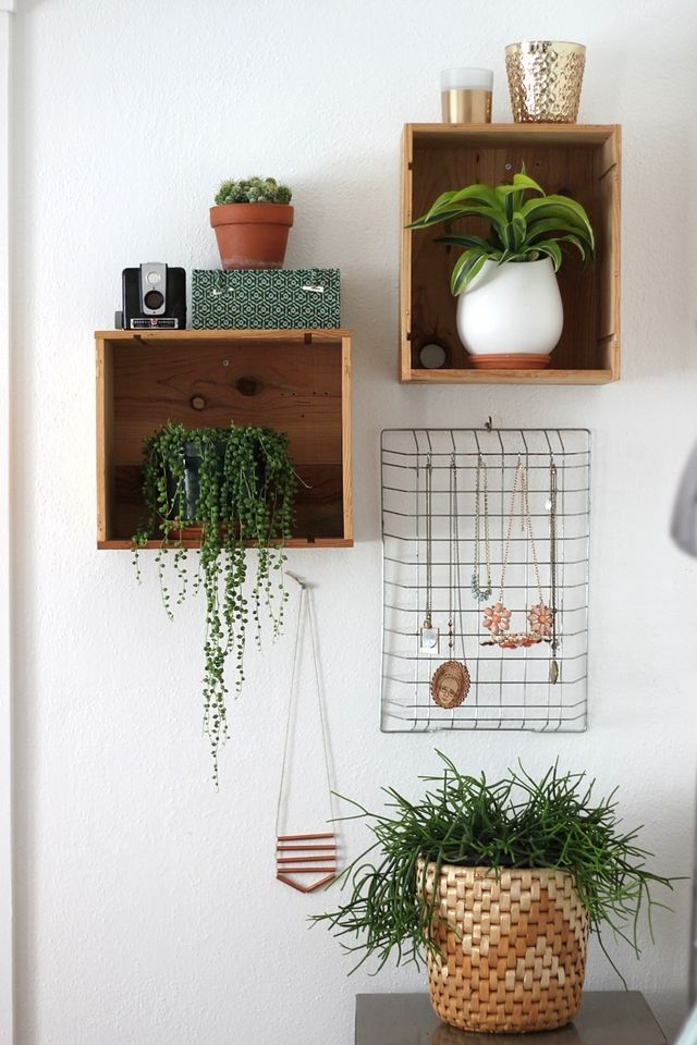 Plants in the Home - Smile and Wave   Squirrelly Minds