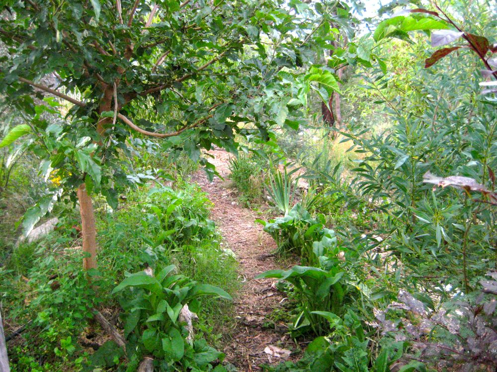 Food Forest - Milkwood | Squirrelly Minds