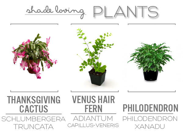 9 Perfectly Indoor Plants | Squirrelly Minds