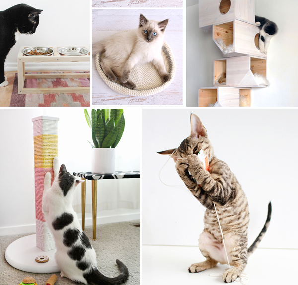 Cat DIY's | Squirrelly Minds